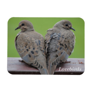 Mourning Doves Magnet