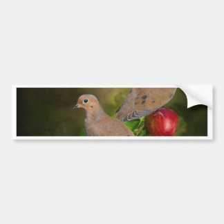 Mourning Doves on the Apple Tree - Painting Bumper Sticker