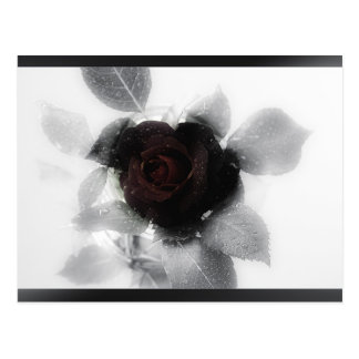 Mourning Memory Rose Postcard
