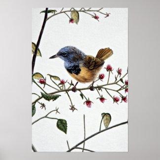 Mourning warbler poster