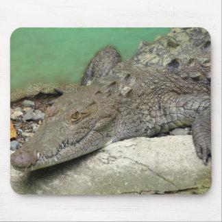 mouse mat crocodile