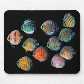 Mouse pad 2 of wild deisukasu fish