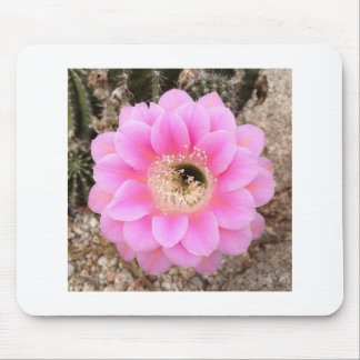 Mouse Pad Pink Cactus Flower