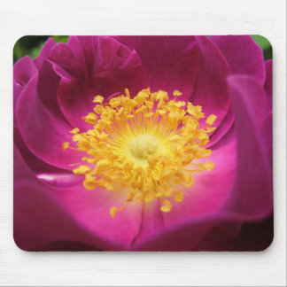 Mouse Pad: Rose