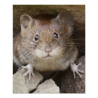 Mouse Portrait Poster