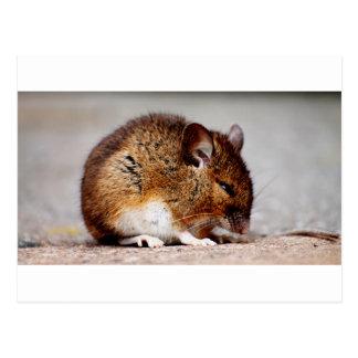 Mouse Print Postcard