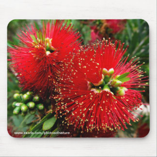 Mousepad - Colorful bottle brush tree