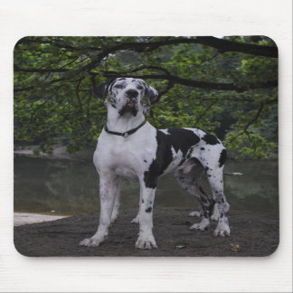 Mousepad Dogge of acre