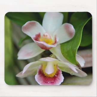 Mousepad - Fan Shaped Orchid
