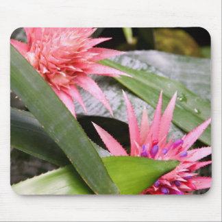 Mousepad - Miltassia Orchid