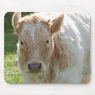 Mousepad of cows of cattle of calves FotoJean l.