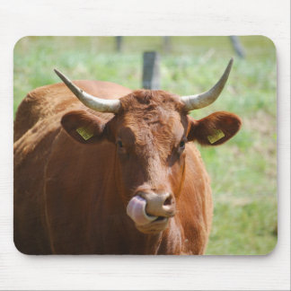 Mousepad of cows of cattle of calves - photo: Jean