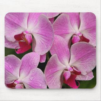 Mousepad - Orchid