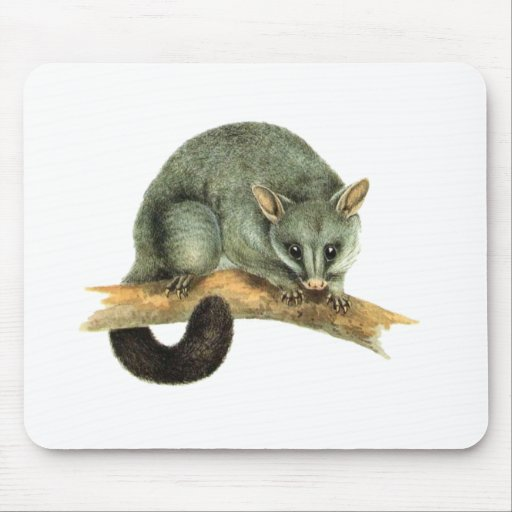 Mousepad - Possum