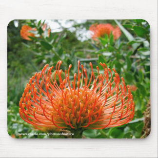 Mousepad - Protea pin cushion flower
