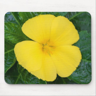 Mousepad - West Indian Holly