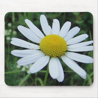 Mousepad white daisy bloom