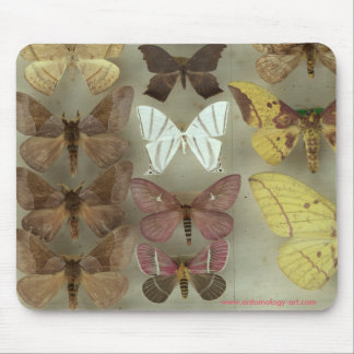 Mousepad with Saturnidae moths