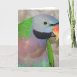 Moustached Parakeet Card