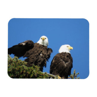 Mr and Mrs Eagle Magnet