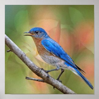 Mr. Beautiful Bluebird Poster