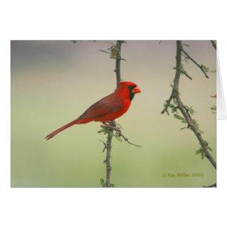 Mr. Cardinal Card