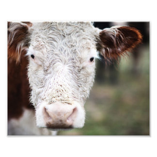 Mr. Cow Photo Print