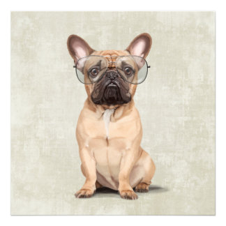 Mr French Bulldog Photographic Print