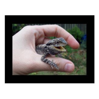 mr lizard postcards