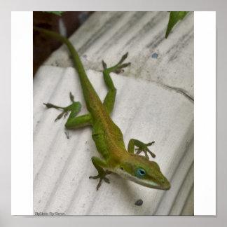 Mr. Lizard Poster
