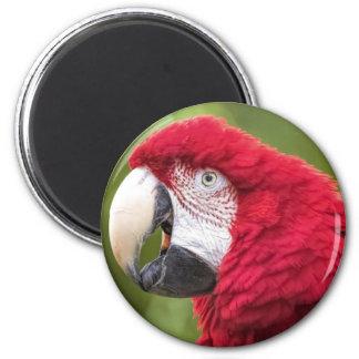 Mr. Macaw Magnet