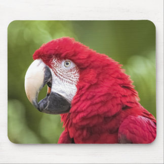 Mr. Macaw Mouse Pad
