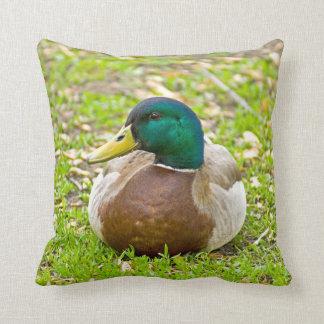 Mr. Mallard the Duck Pillow