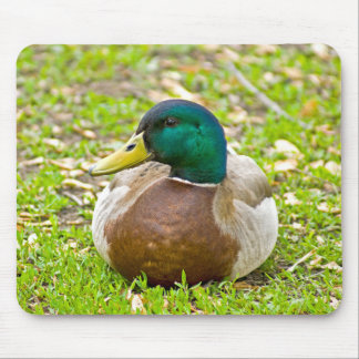 Mr Mallard the Duck Mouse Pads
