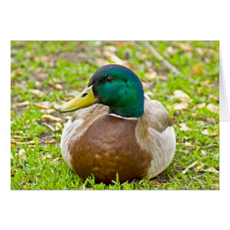 Mr. Mallard the Duck Note Card