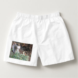 Mr.  Nuttley Boxers