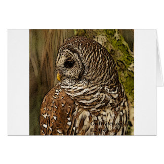 Mrs Barred Owl Cards