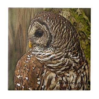 Mrs Barred Owl Small Square Tile
