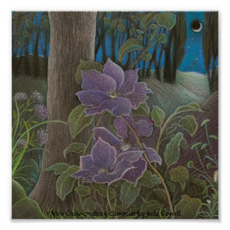 'Mrs Cholmondeley clematis by Moonlight' Posters