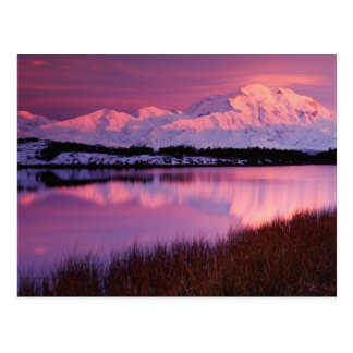 Mt. Denali at sunset from Reflection Pond Postcard