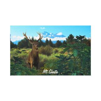 Mt Shasta Buck Canvas Print