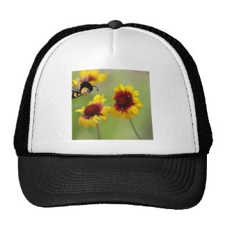 Mt. Shasta Daisies And Nonzomb Bee Hat