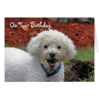 Mud Faced Poodle Dog Birthday Card
