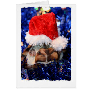 Mud turtle with head covered in santa hat card
