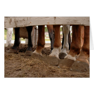 Muddy-Hooved Trail Horse Legs behind Fence Card