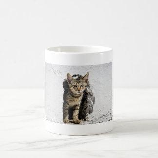 Mug - Cute Greek Kitten on Santorini, Greece