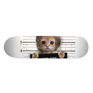 mugshot cat - crazy cat - kitty - feline skate board