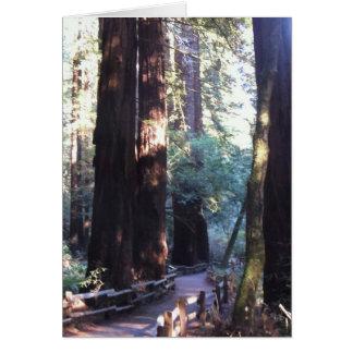Muir Woods Card