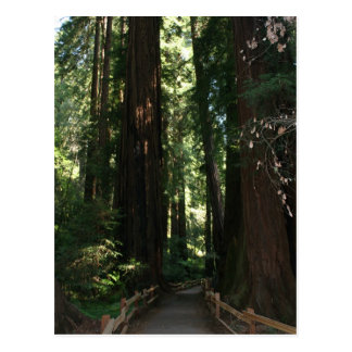 Muir Woods National Monument Postcard