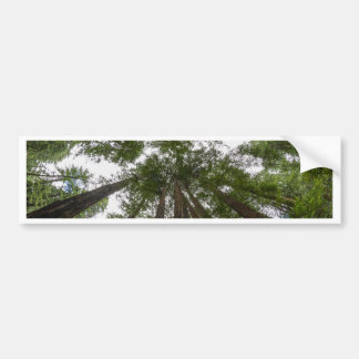 Muir Woods sky view Bumper Sticker